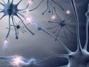 Synapsen (2)